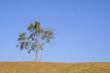 tree of sky