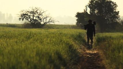 Shiluette of Asian farmer walk along rice field