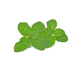 Mint leaves  with white background