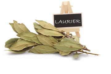 Laurier branche