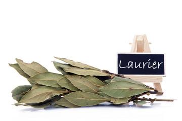 Branche de Laurier