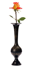 orange rose in black vase on white