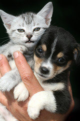 cat and dog