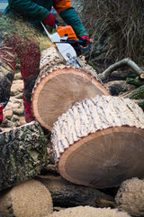 Lumberjack cutting logs with chainsaw