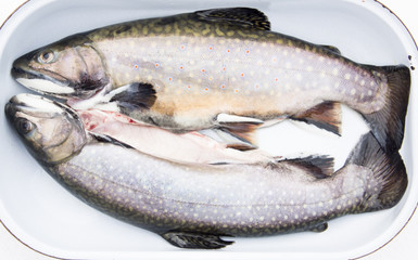 Uncooked Trouts in Roasting Pan