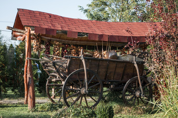 horse cart decorated with onion ropes