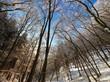 Blauer Himmel durch Bäume
