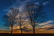Drei Bäume