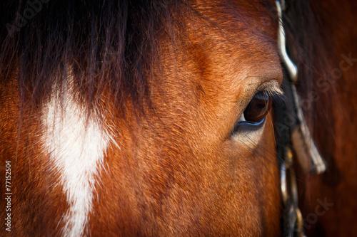 Staande foto Paardrijden Auge