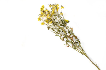 dried yellow flowers bouquet isolated on white background