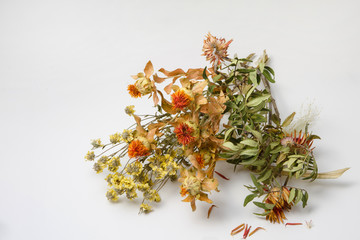 bouquet of dry withered flowers on neutral background