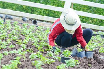 gardener is planting flower