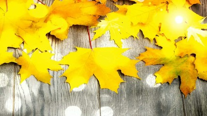 leaves on a wooden background