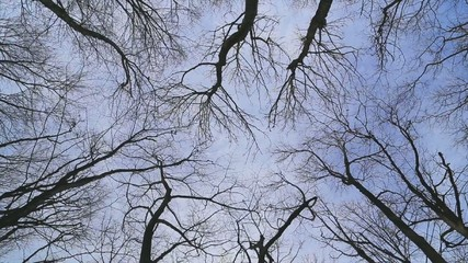 Wind moves branches in the forest