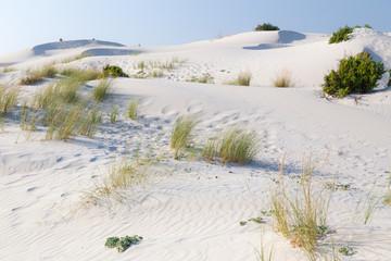 Vegetation dunes.