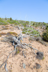 Dry tree on the bare ground