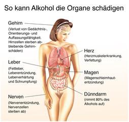 Alkohol schädigt die Organe