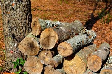Firewood drying in the sun