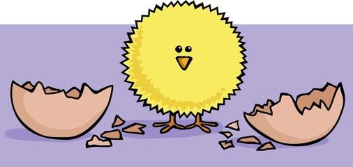 fluffy chick hatch