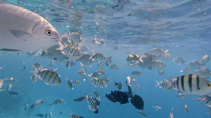 attack of crazy tropical fish