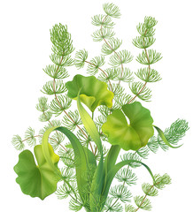 Bunch of aquatic plants