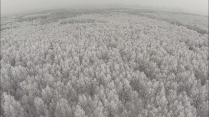 AERIAL: Winter forest