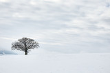 The Lonely Winter Tree