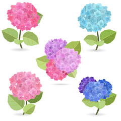 Collection of flowers, hydrangea