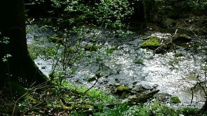 Bach mit Brunnenkresse