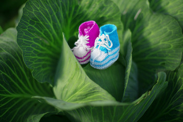 Baby shoes. Newborn, kid art. Beauty child shoes in cabbage. Boy