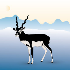 blackbuck male illustration