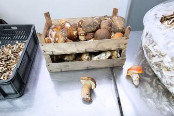 mushroom storage