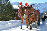 Pair of horses. Braunwald, famous Swiss skiing resort