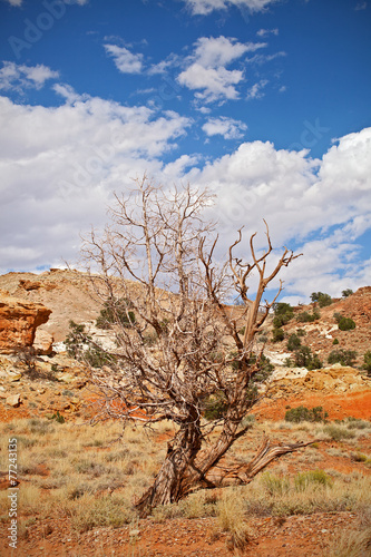 Tree in the red desert of Southwest USA