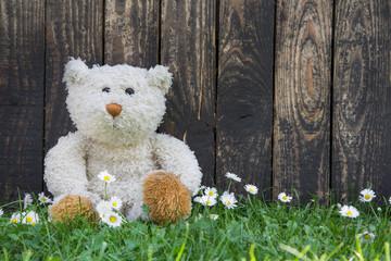 Teddybär allein im Sommer