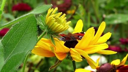 Schmetterling im Blumenbeet