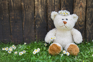 Teddybär allein im Sommer auf Holz Hintergrund