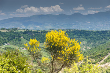 Nature of Lazio