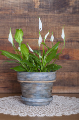 White calla flower in a handmade decorated flowerpot