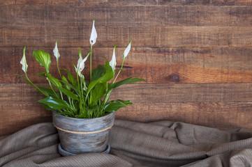 White calla flower in a handmade decorated flowerpot