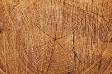 texture di un tronco tagliato