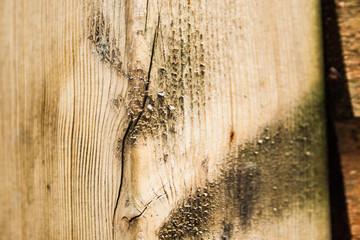 wood background7