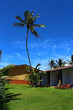 Постер, плакат: Пальма на фоне неба отель Club Koggala Village