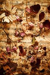 Dry roses on vintage paper background