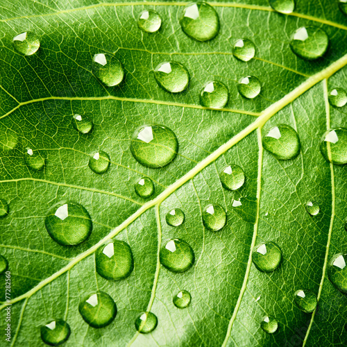 canvas print picture Green leaf with drops of water