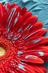 Gerbera flower in blue paint