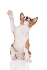 adorable puppy waving