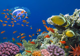 Fototapeta Coral and fish in the Red Sea. Egypt