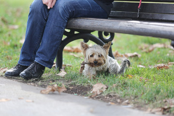 Small Maltese resting under a bench in the park