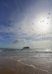Flock of seagulls fly overhead at Mystics Beach